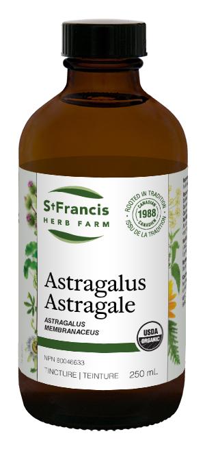 Astragalus - By St. Francis Herb Farm
