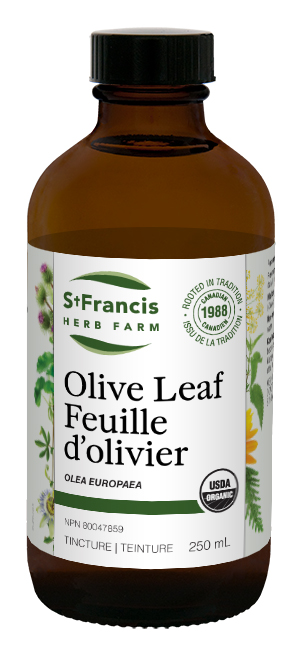 Olive Leaf - By St. Francis Herb Farm