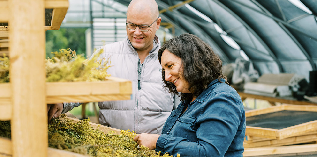 Plant Medicine 101 - Tinctures - Harvesting herbs